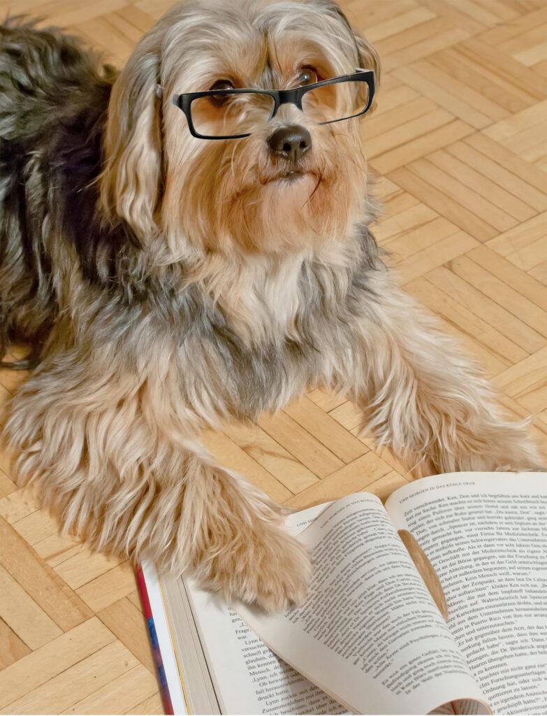 Hund liest Buch